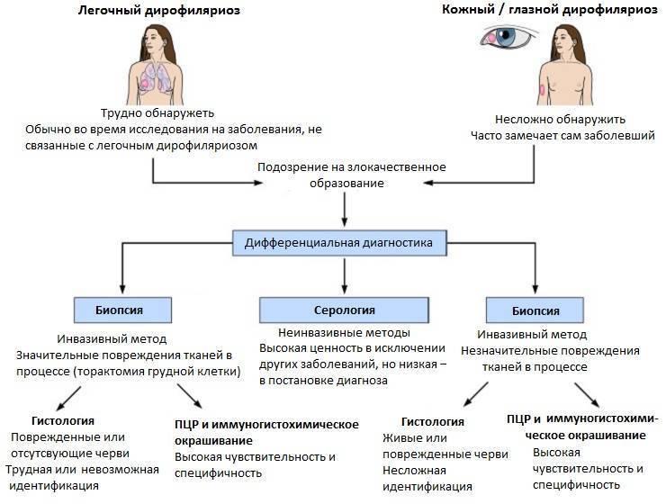 Дирофиляриоз (сердечные черви)