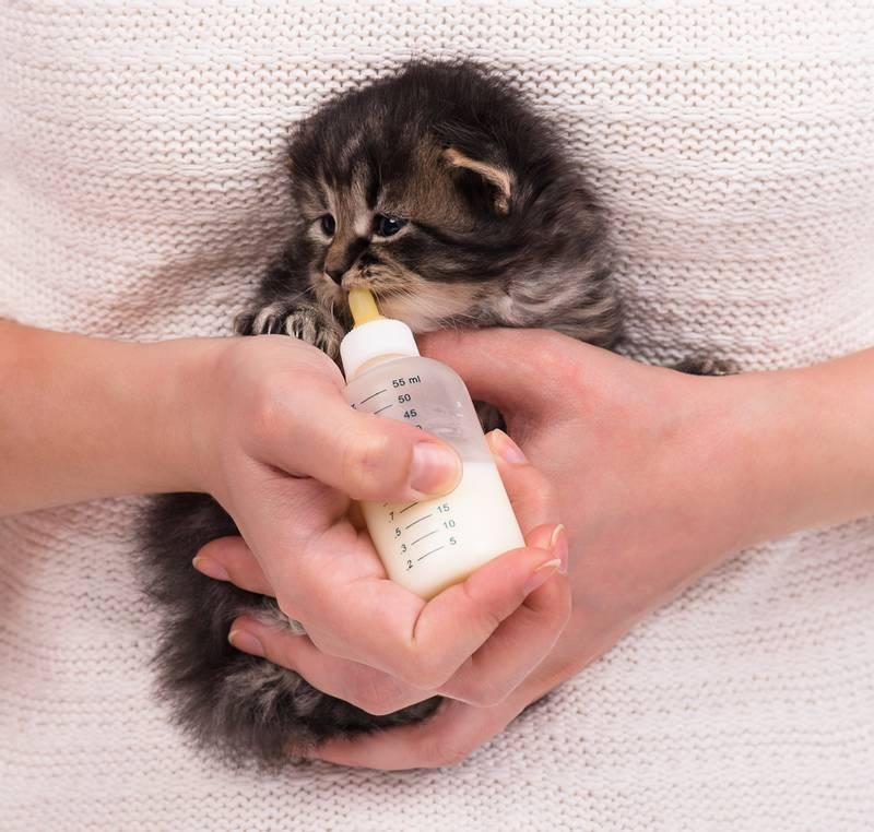 Чем кормить котенка в 1 месяц: рекомендации по кормам, режиму кормления и рациону