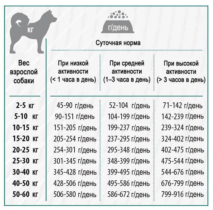 Каким кормом лучше кормить щенка алабая: категории сухих кормов