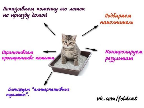 Как приучить котенка к лотку: инструкция по применению