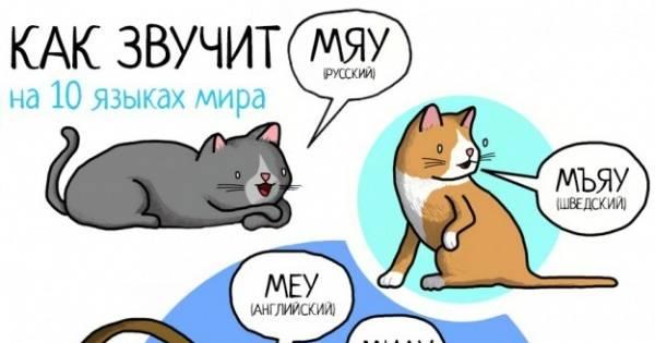 Мяуканье кошки: причины и значение звуков, которые издают питомцы