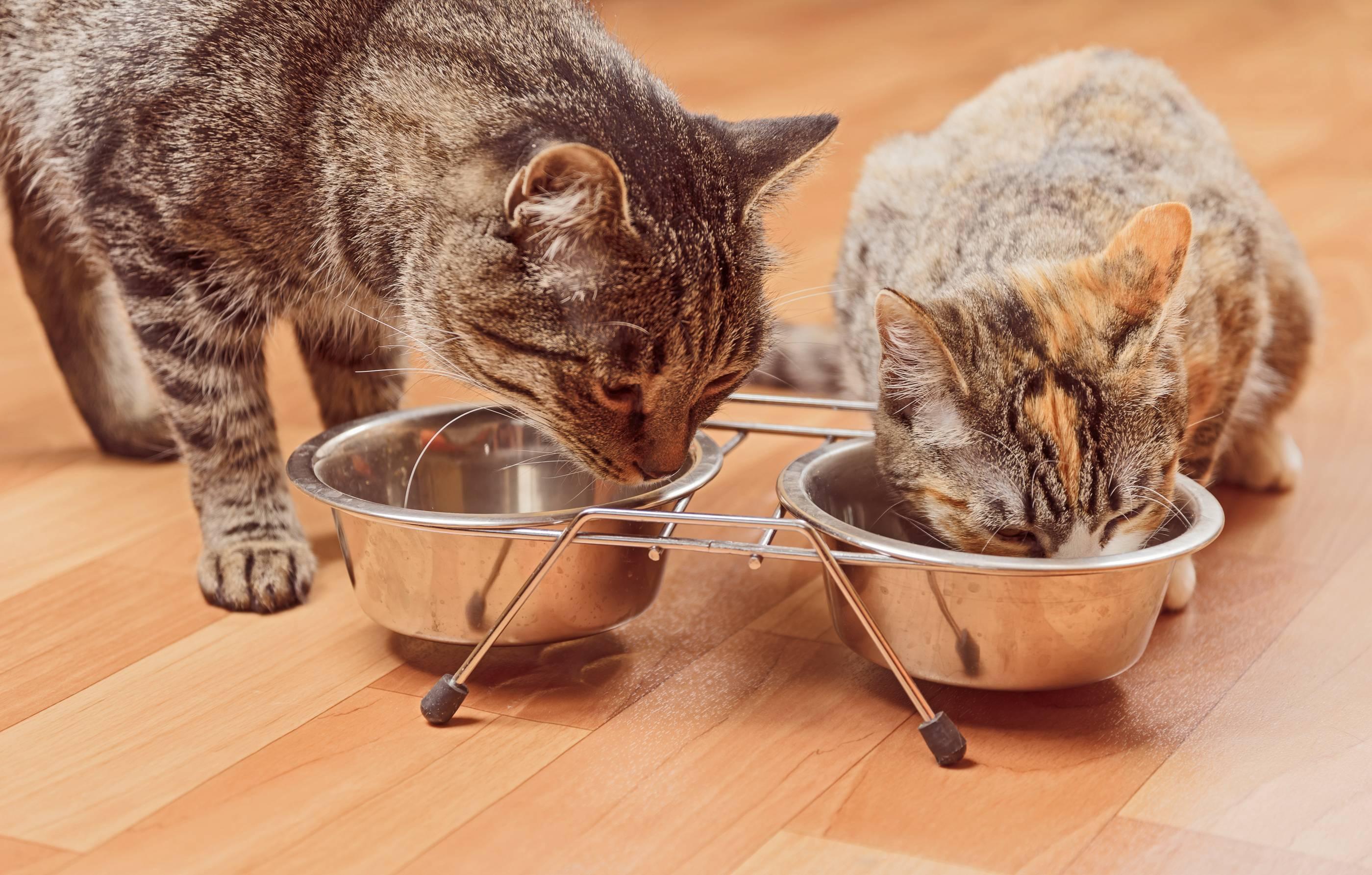 Почему кошка закапывает миску с едой
