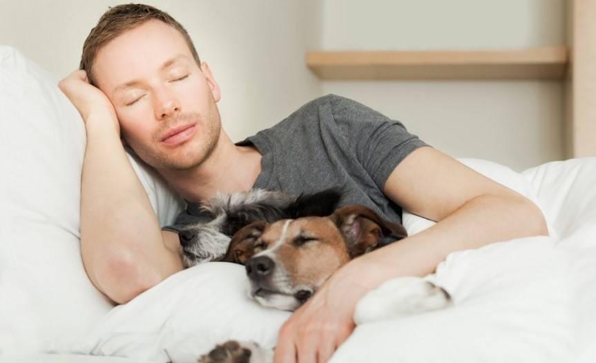 Как отучить собаку спать на кровати