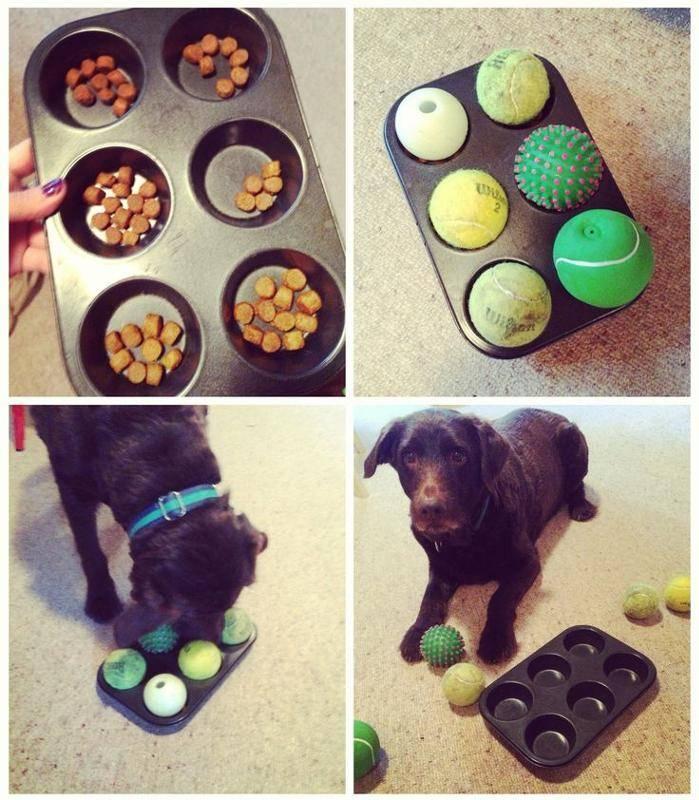 Рецепты угощения для собак, с указанием ингредиентов и способов приготовления.