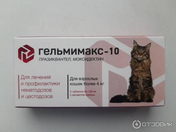 Дегельминтизация (прогнать глистов) - ветеринарная клиника нефрологии веравет. ветеринар на дом