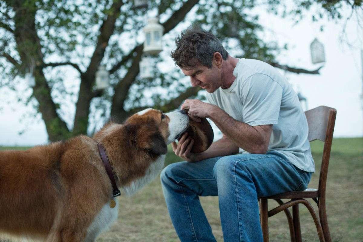 Собачья жизнь: как увеличить продолжительность жизни любимого питомца