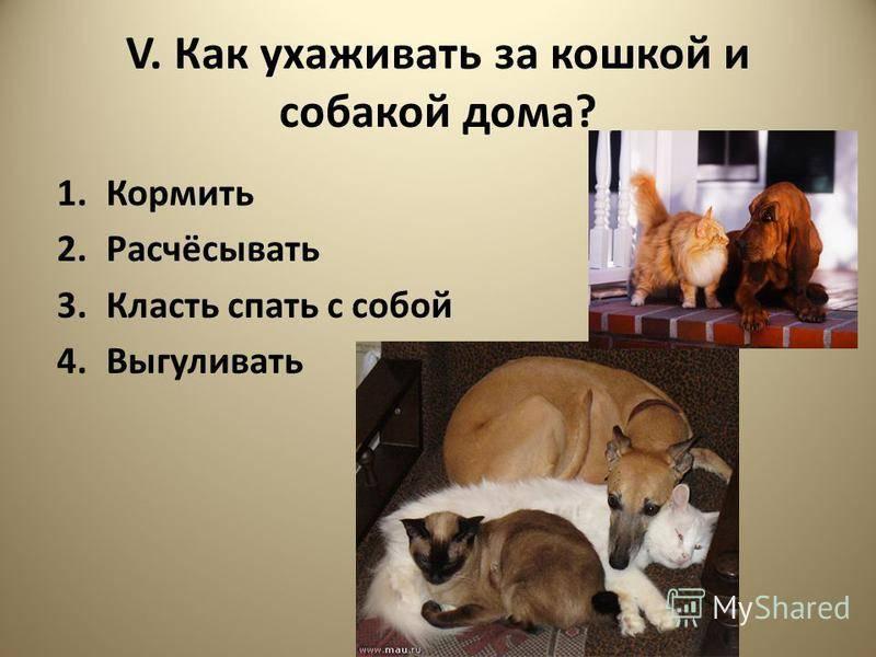 Собака. содержание, уход, кормление собак. – ветеринарные клиники ушихвост, полный спектр услуг для животных.