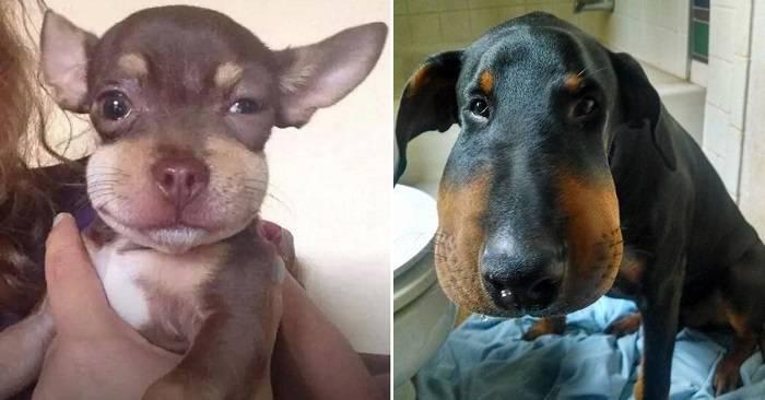Собаки и насекомые – способы защиты питомцев