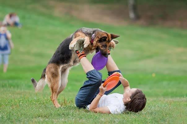 Собака прыгает на хозяина при встрече — как отучить ее