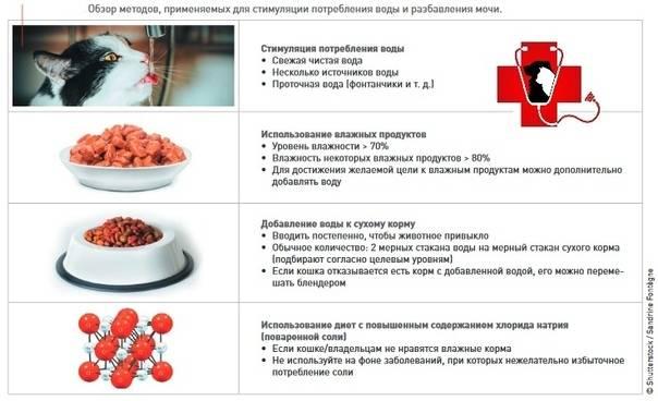 Диета при мочекаменной болезни : меню и рецепты | компетентно о здоровье на ilive