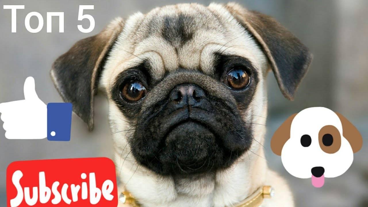 Какие породы собак часто путают между собой