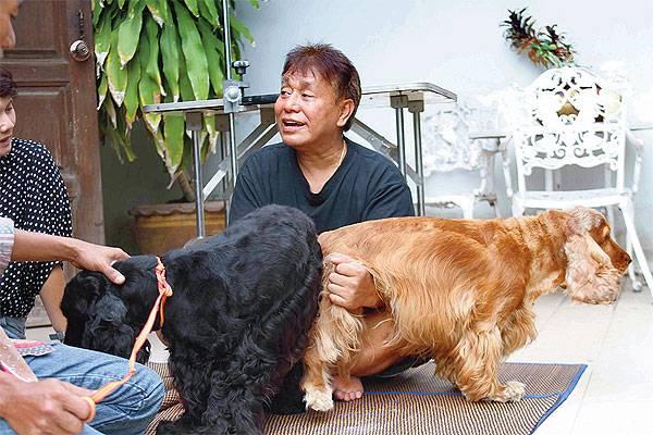 Вязка собак: подходящий возраст, подготовка, правила. все о случке собак