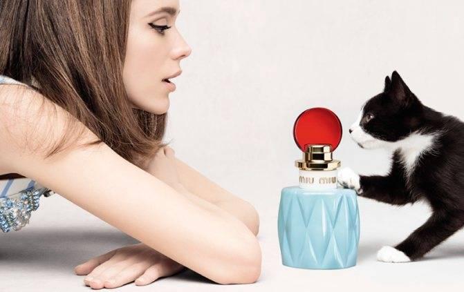 Какие запахи не любят кошки – pet-mir.ru