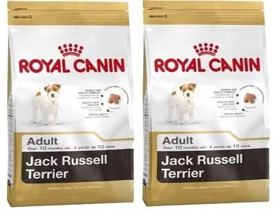 Чем кормить джек-рассел-терьера: рейтинг сухого корма purina и роял канин, а также можно ли давать его щенкам
