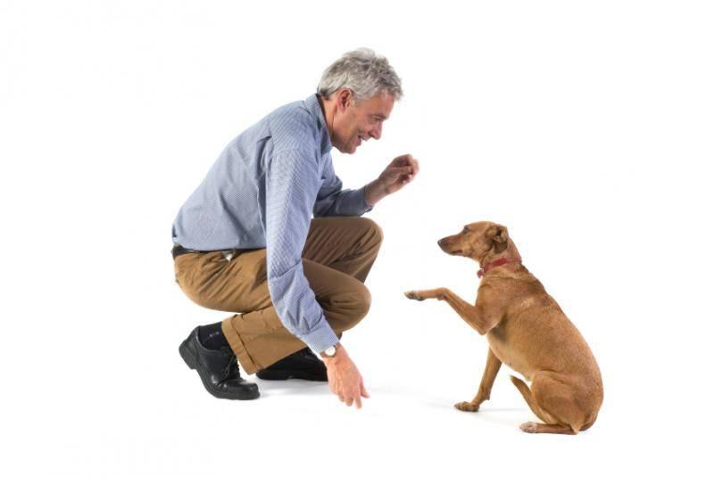 Как отучить собаку прыгать на людей от радости при встрече: обучение командам и советы хозяевам непослушных питомцев