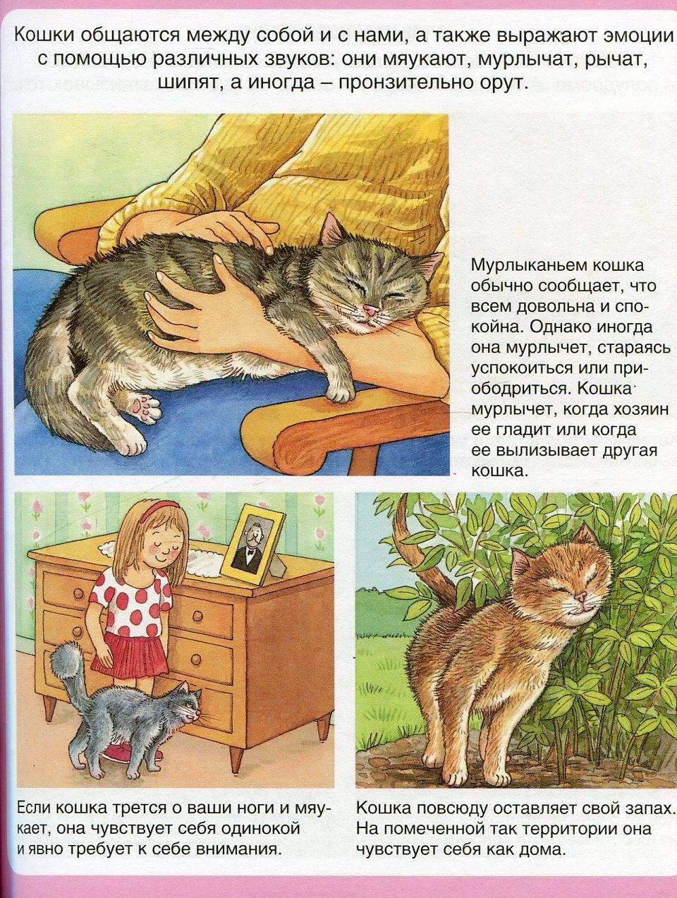 5 действий, которые убедят кошку в вашей любви - gafki.ru