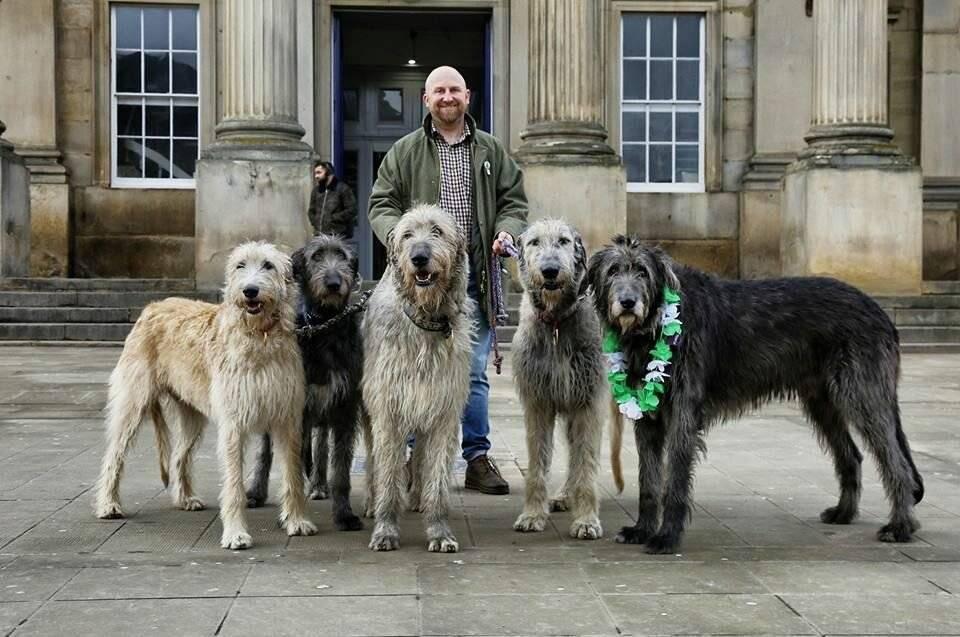 Собаки, сильнее волка: виды, описание и фото популярных волкодавов