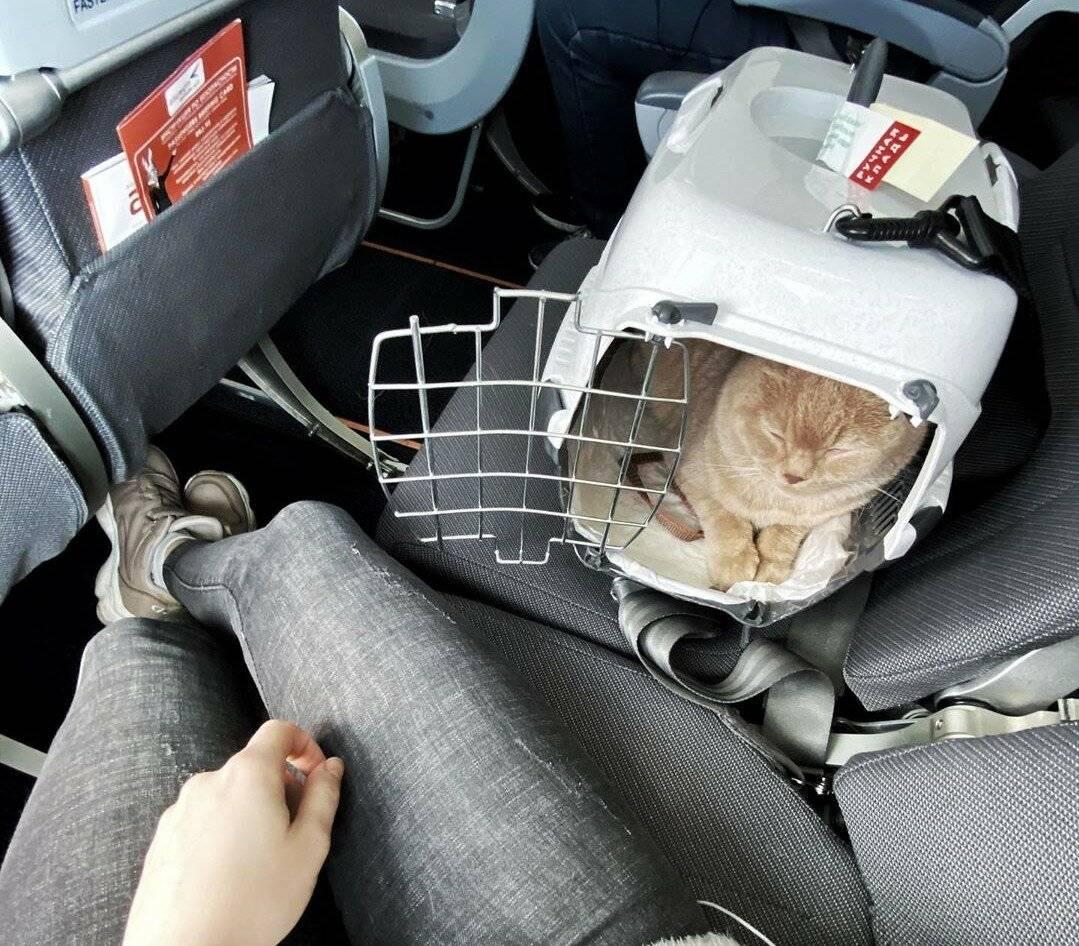 Как правильно перевозить кота в машине: правила и советы