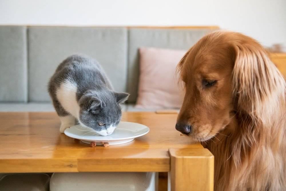 Кисломолочная диета для собаки