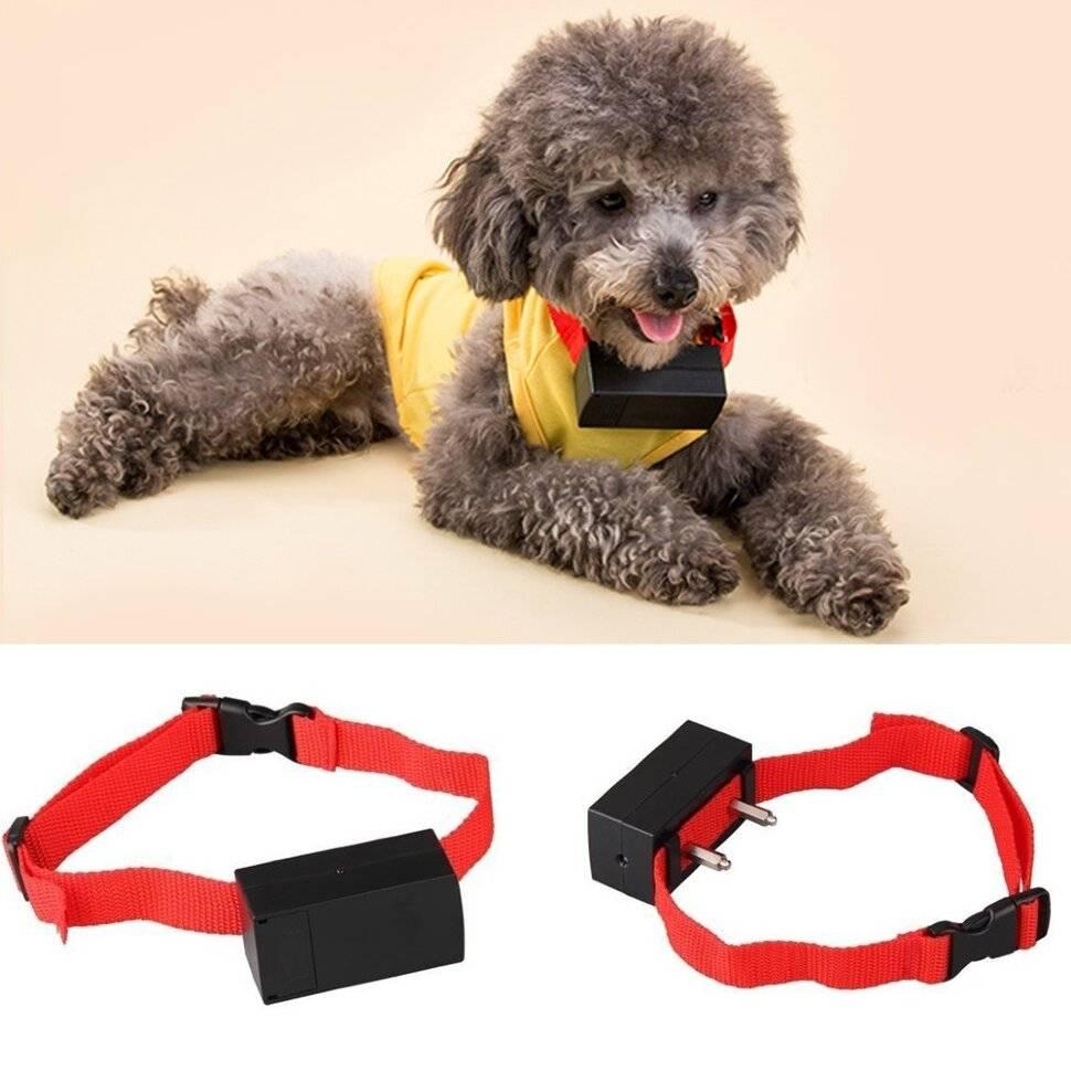 Ошейник для собаки для дрессировки