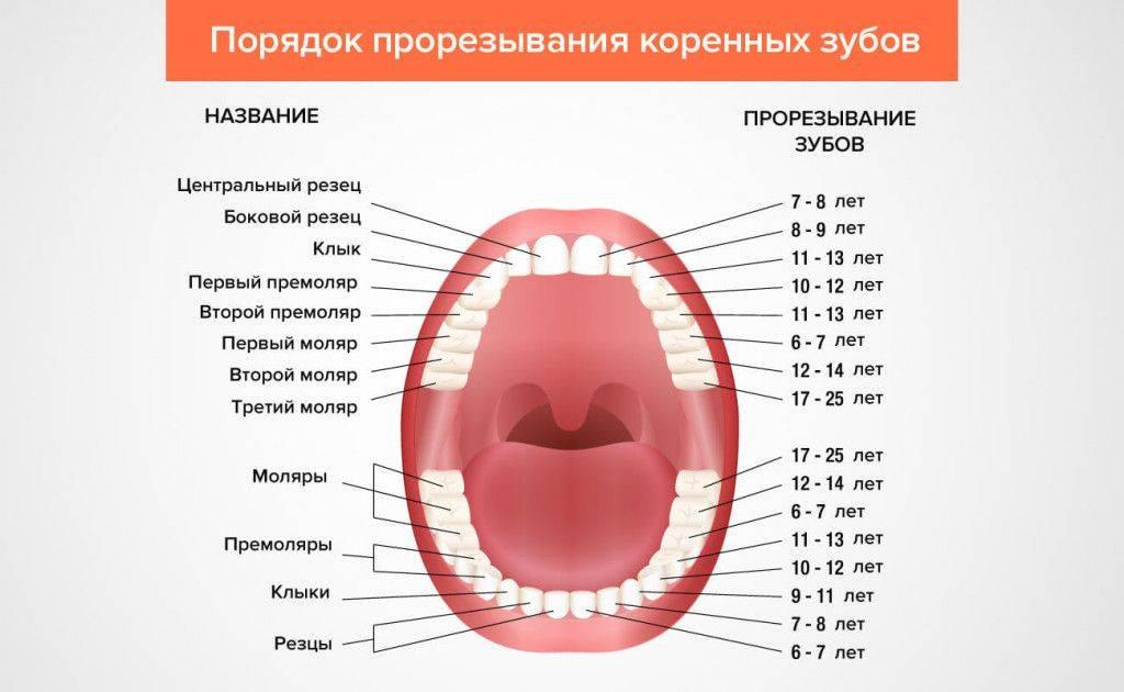 Болезни зубов — кариес, стоматит и пародонтоз у собак