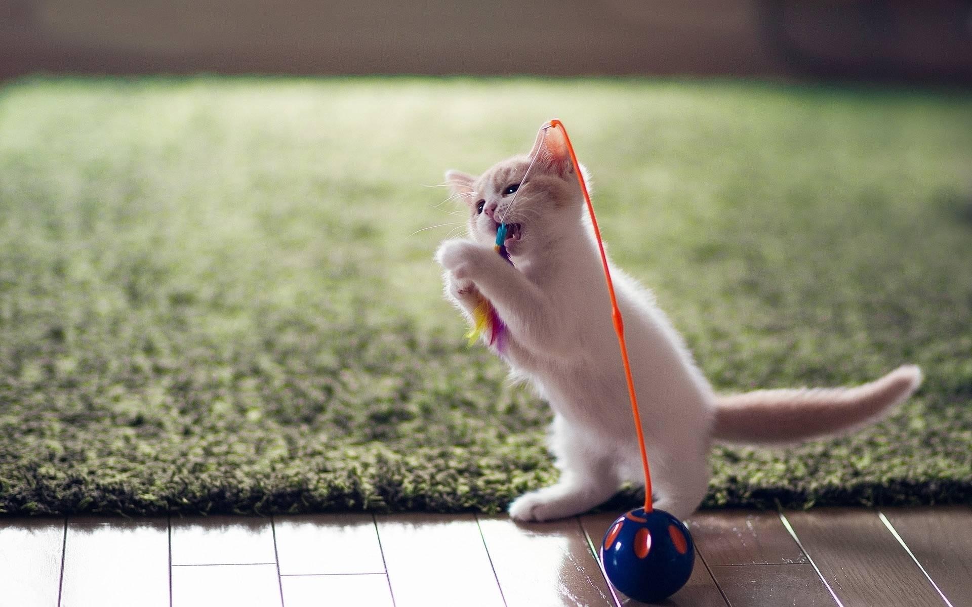 ᐉ как дрессировать кошку? - ➡ motildazoo.ru