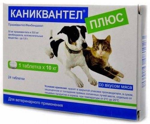 """""""каниквантел"""" для кошек: показания, инструкция по применению, отзывы"""