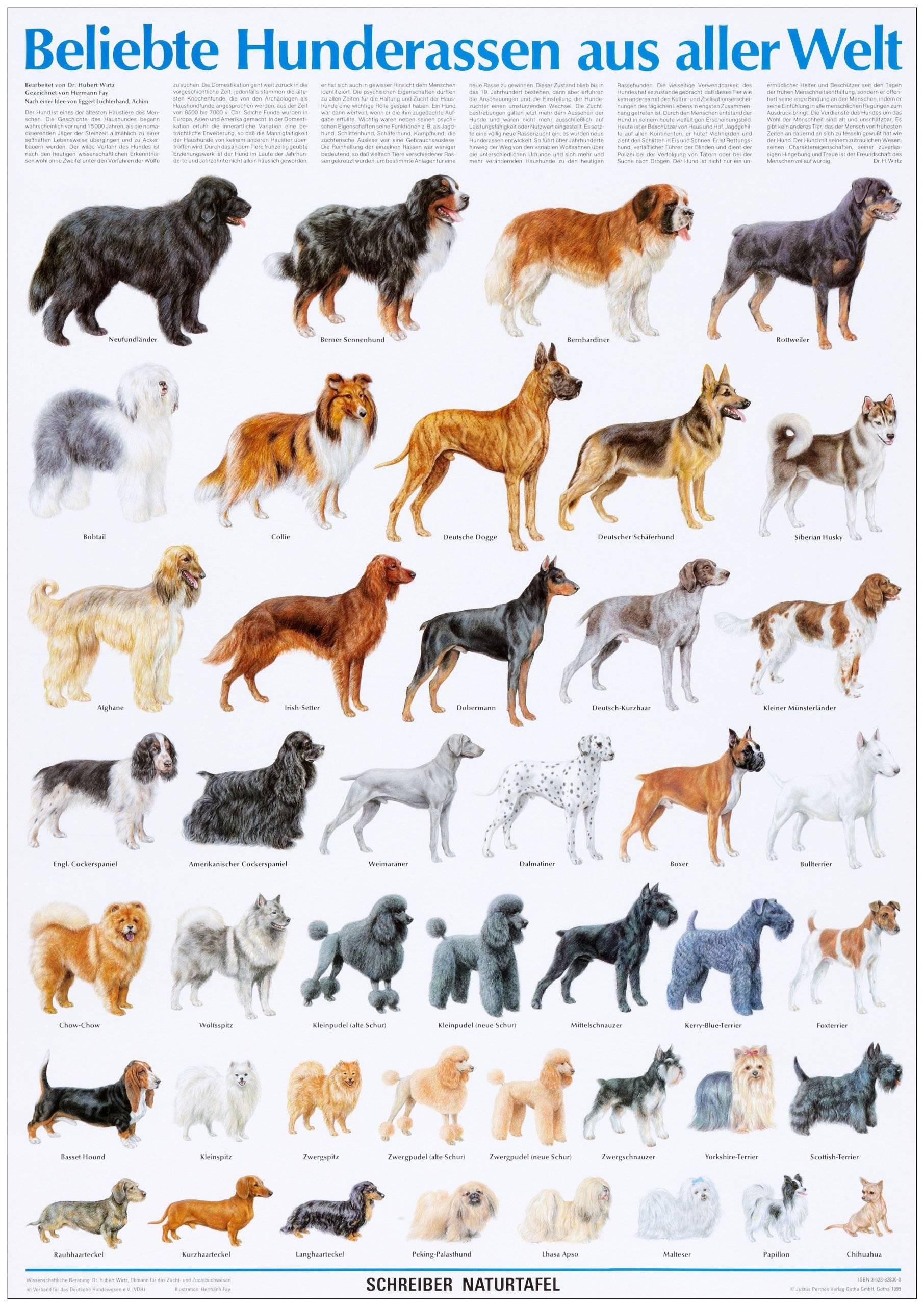 Лучшие охотничьи породы собак с фотографиями и ценами