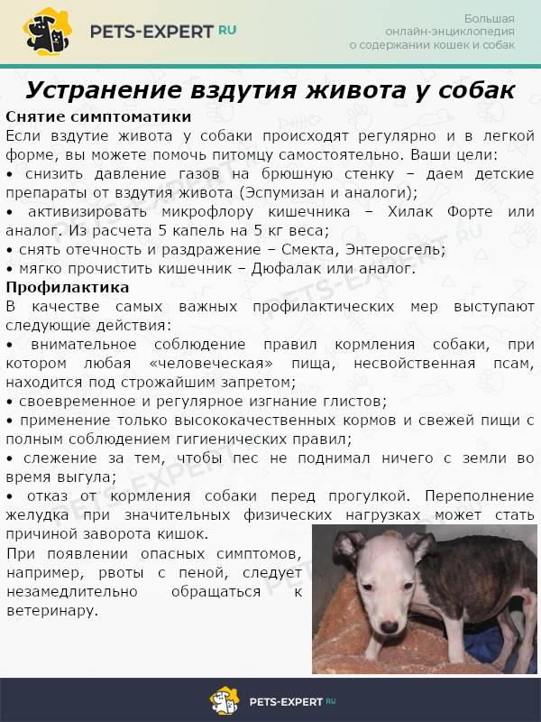 Газы у собаки: причины, диагностика, лечение