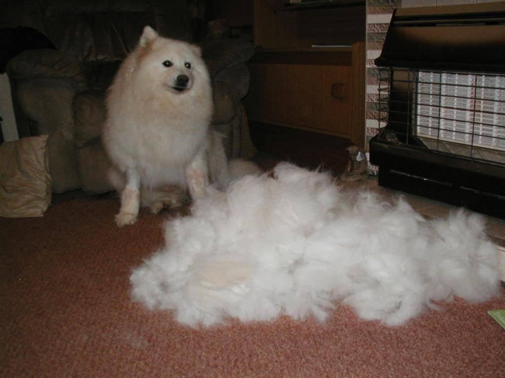 Выпадает шерсть у собаки