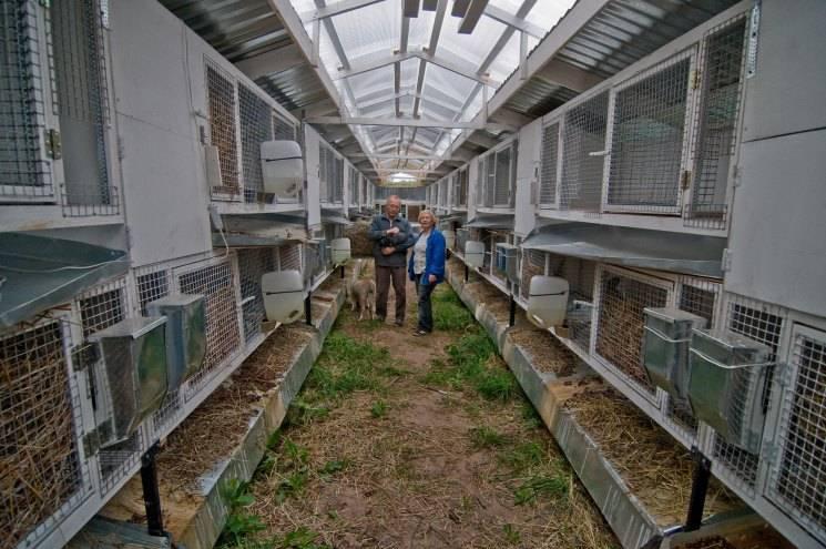 Готовый бизнес-план по организации кролиководческой фермы — перспективы рынка и анализ конкуренции, план сбыта, факторы риска
