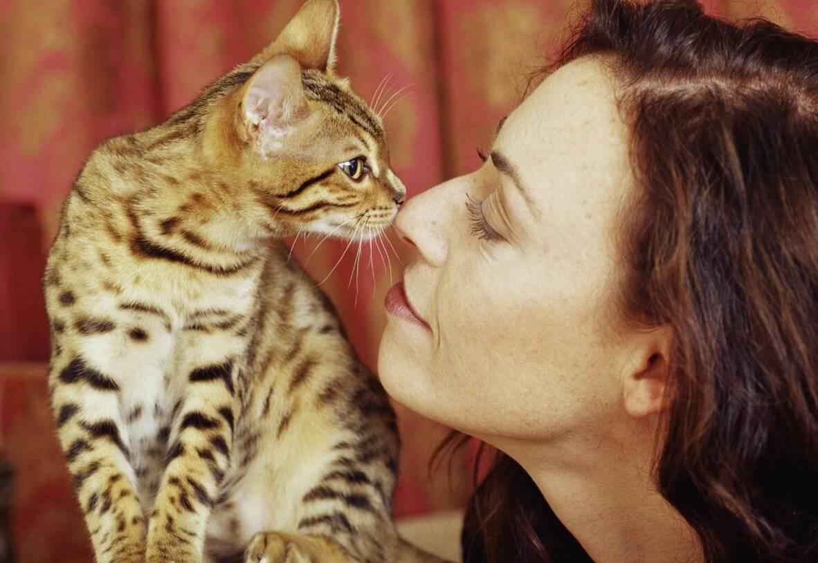 Девять независимых исследований доказали, что кошки - лучшие домашние животные