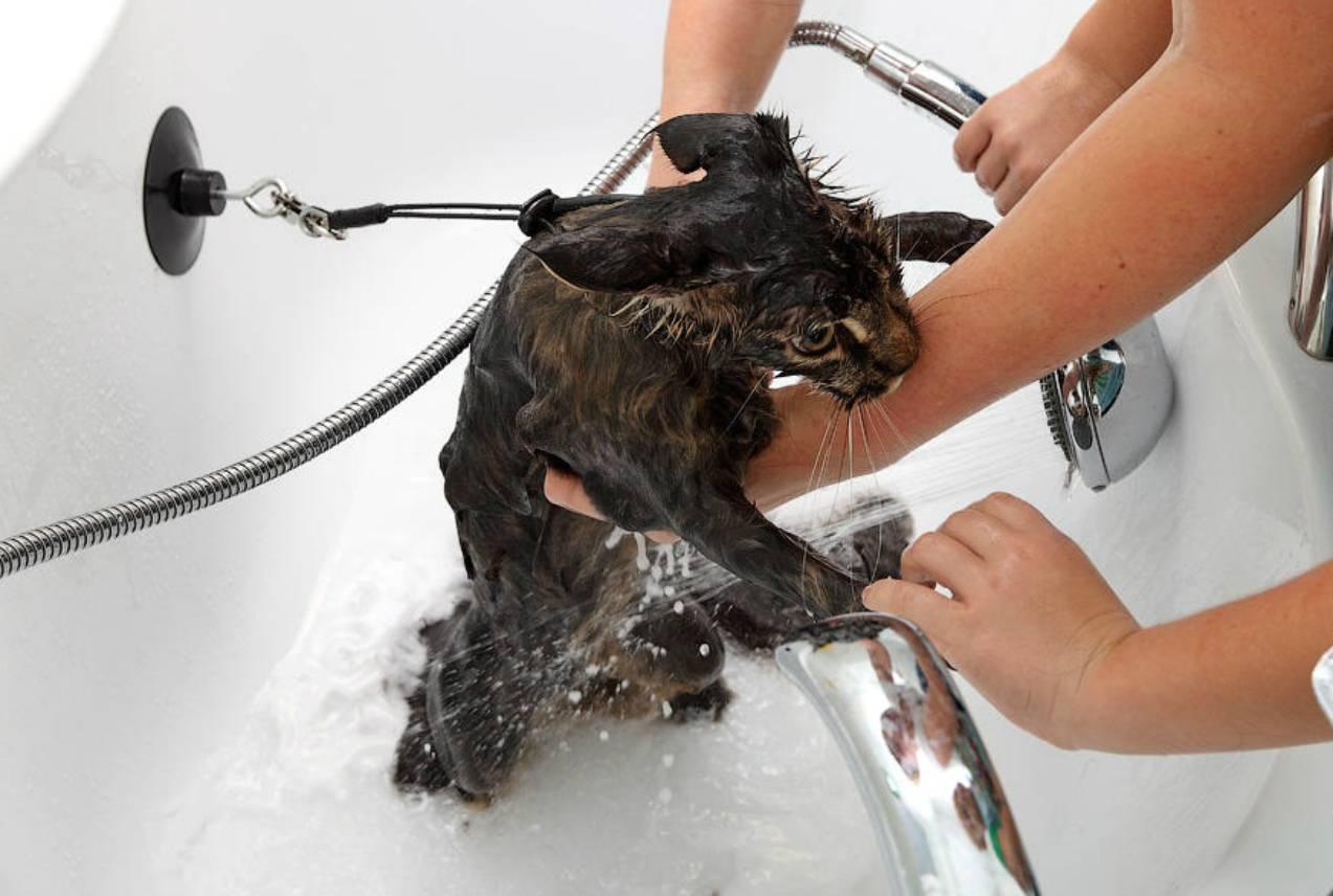 Боязнь воды у кошек: причины почему не любят купаться, варианты как приучить