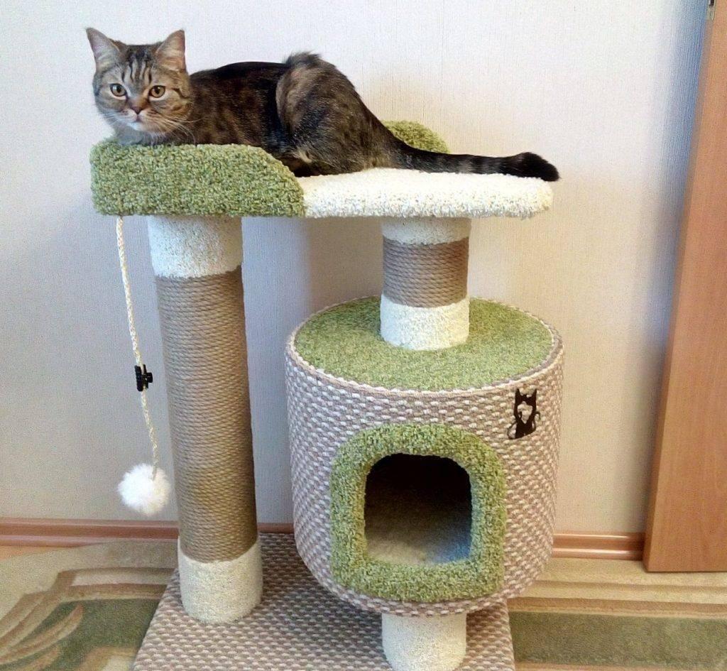 ᐉ как организовать туалет для нескольких кошек? - ➡ motildazoo.ru