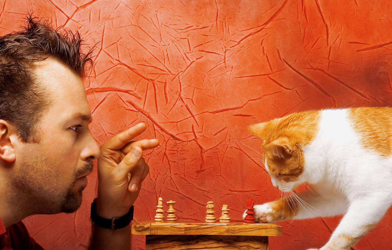 Почему некоторые люди любят кошек а некоторые собак | my darling cats