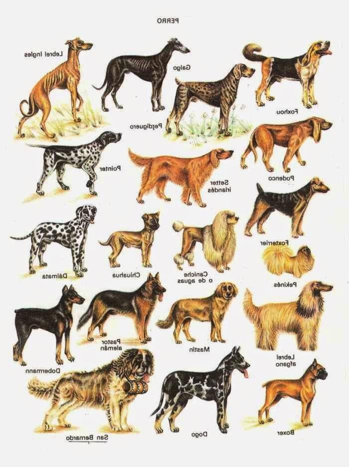 Породы всех средних собак с фотографиями и названиями