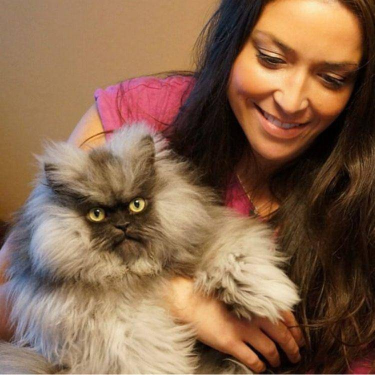 Коты известных людей – оригинальные клички, необычные судьбы