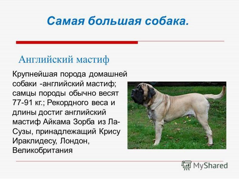 Бетховен (собака): какая порода, как называется
