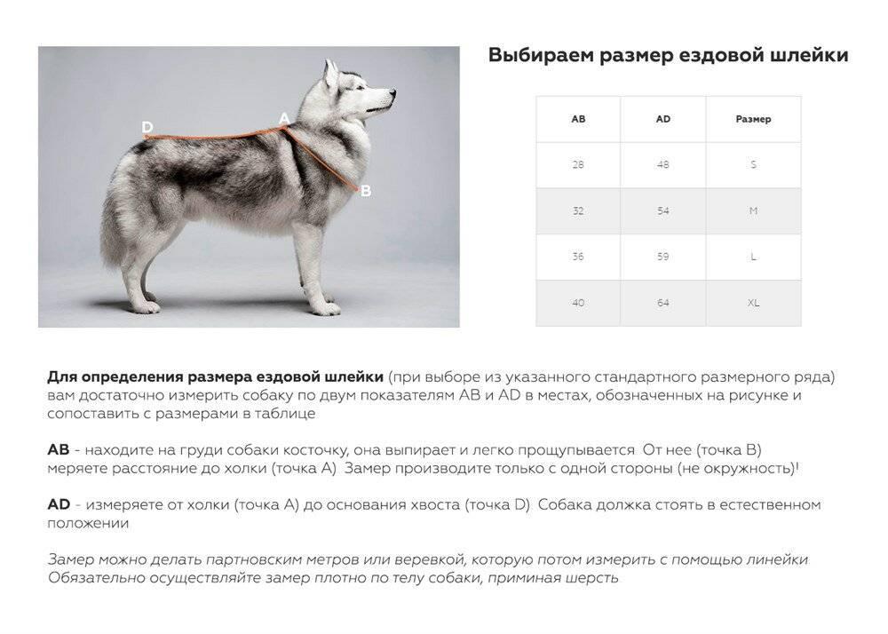 Как подобрать шлейку для собак под конкретную породу