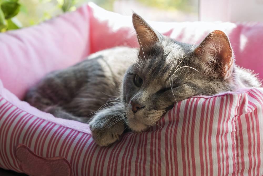 Какую опасность представляет кошка, которая спит на подушке