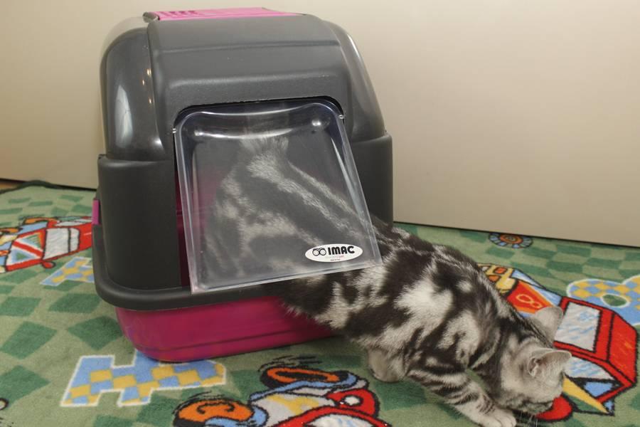 Туалет для кошки: как выбрать лоток и наполнитель