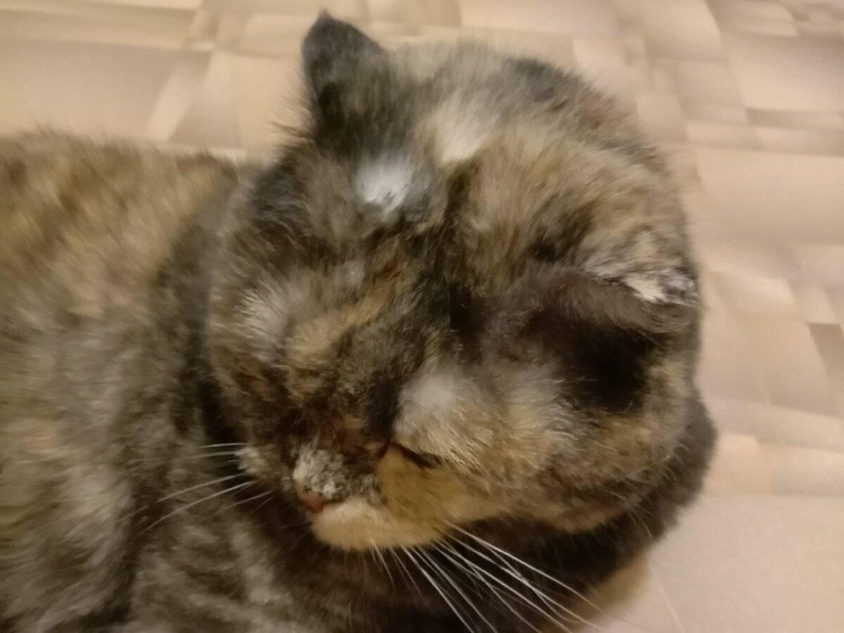 Топ-5 «кошачьих» болезней, опасных для человека