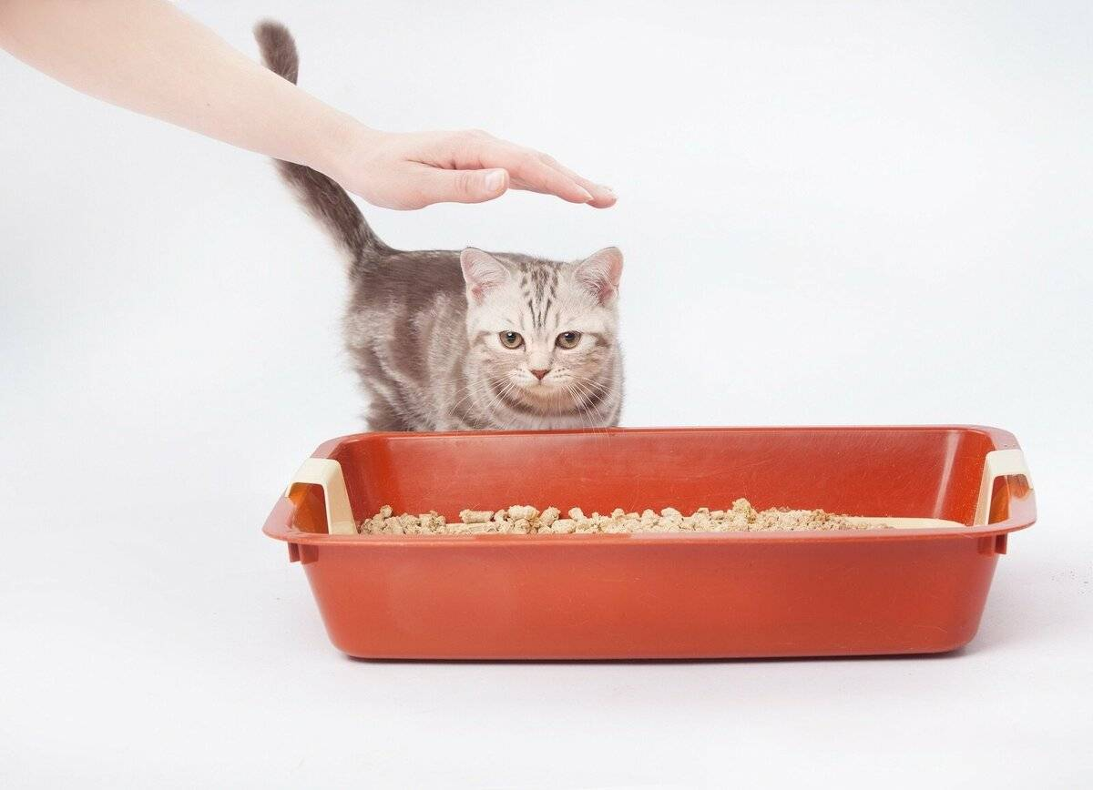 Как отучить гадить кота и кошку  в неположенном месте