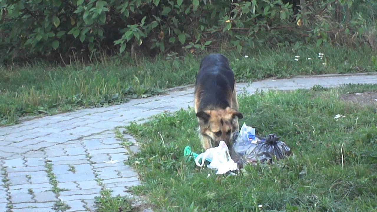 Что делать если собака съела пакет