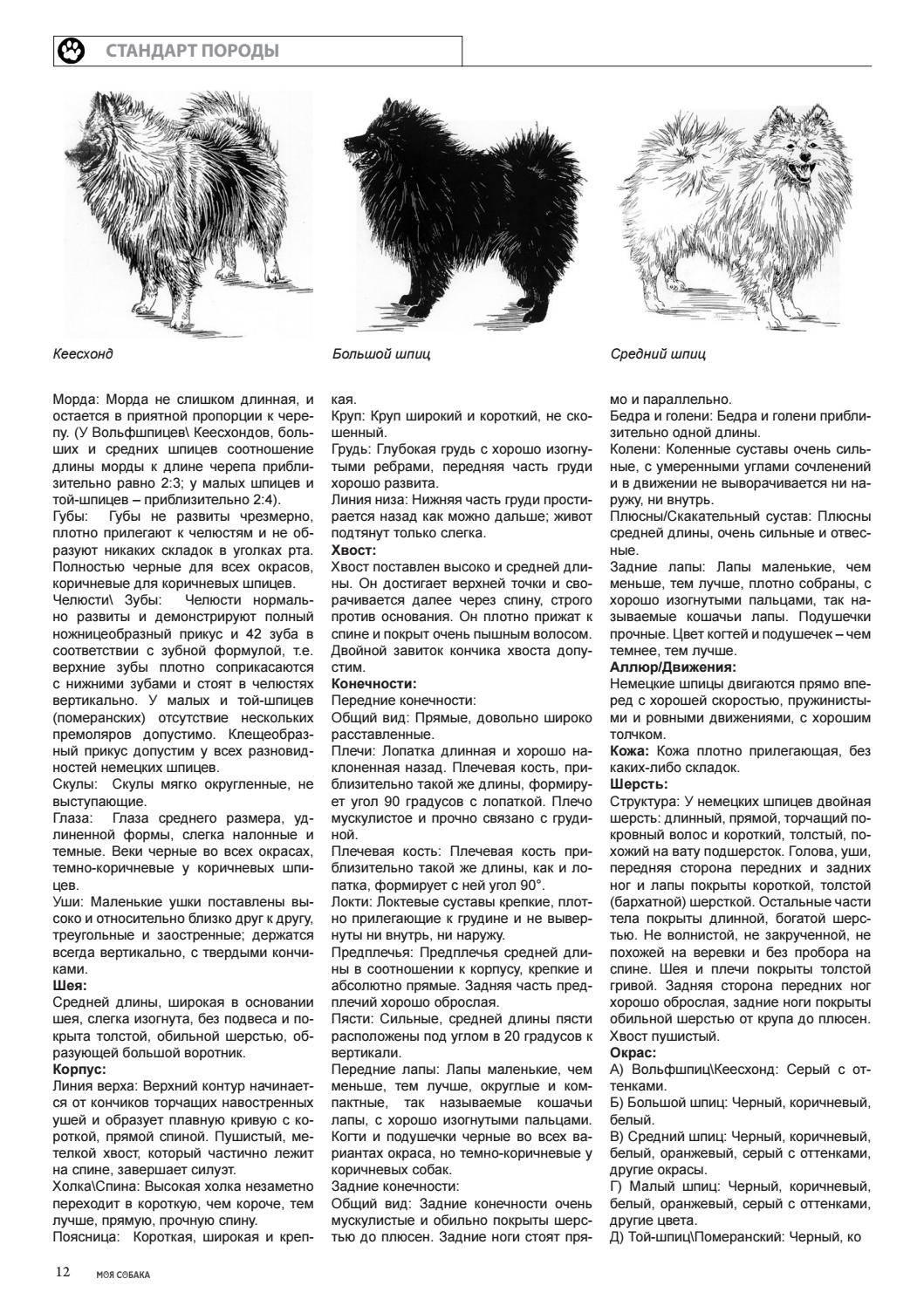 Карликовый померанский шпиц: фото и описание, цена, содержание и уход