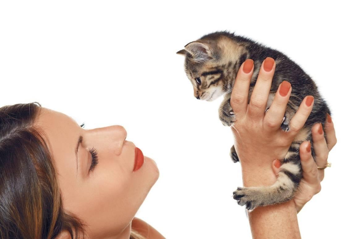 Как правильно воспитать котенка ласковым и умным