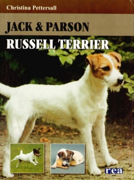 Верный друг и отличный охотник «парсон-рассел-терьер»: описание породы и особенности содержания