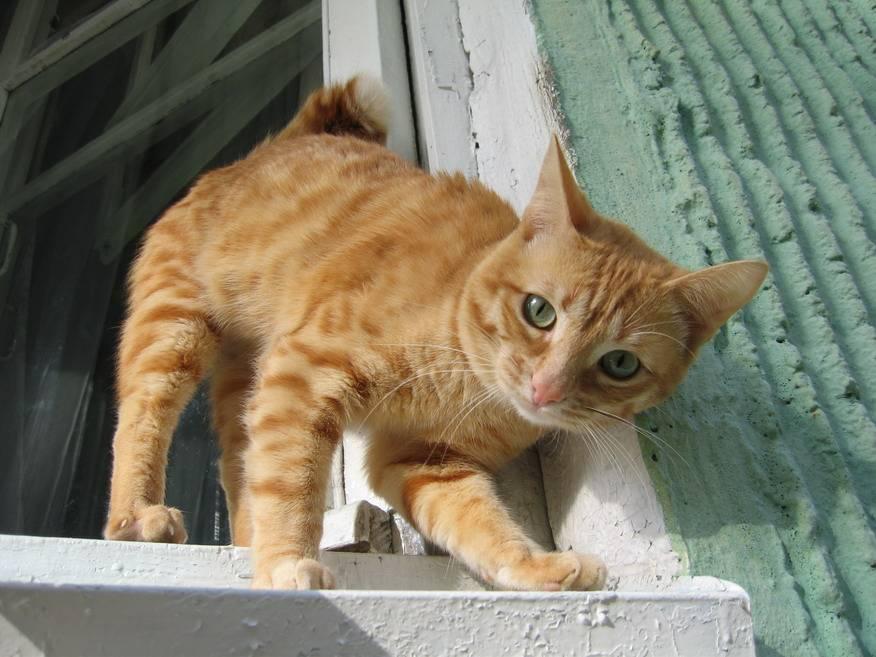 Как отличить кота от кошки: при рождении, по морде и цвету
