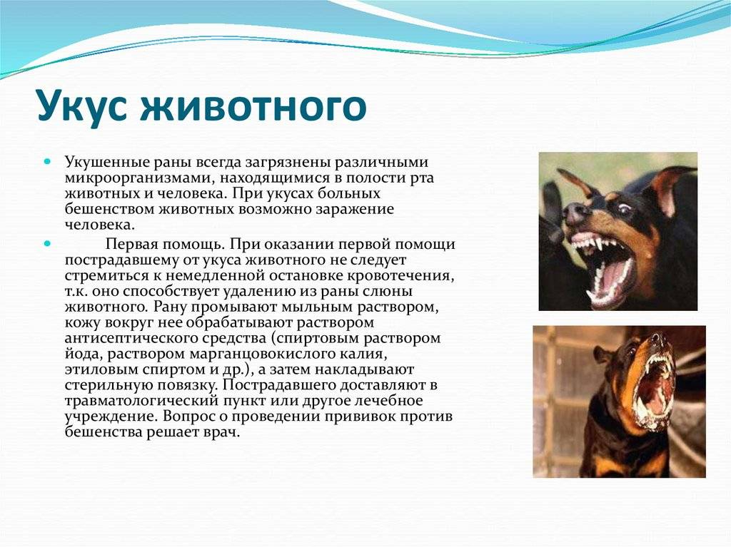 Если собаку укусила оса: что делать в домашних условиях