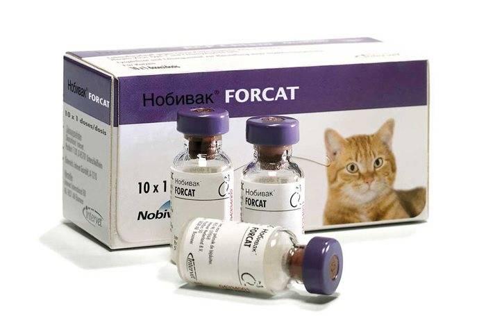 Вакцина от аллергии на кошек: планы и реальность